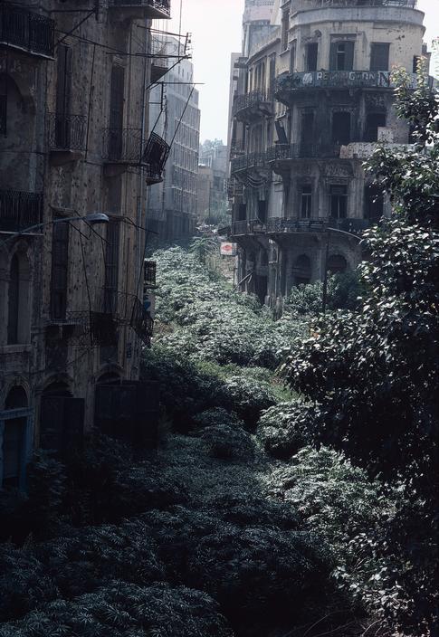 Beirut's Green Line